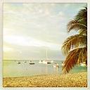 Mauritius, palm beach - JUNF000451
