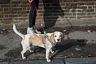 UK, London, dog going walkies in the city - MAUF000043