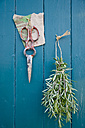Bunch of rosmary and scissors hanging at wooden wall - GISF000182