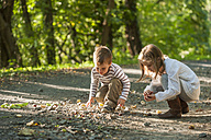 Children collecting chestnuts on forest track - PAF001474