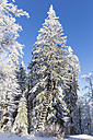 Germany, Bavaria, Bohemian Forest in winter, raised hide - FOF008355