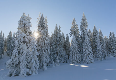 Germany, Bavaria, Bohemian Forest in winter - FOF008358