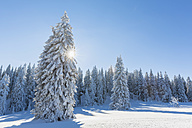 Germany, Bavaria, Bohemian Forest in winter - FOF008361