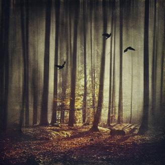 Birds flying in forest - DWIF000652
