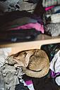 Tabby cat sleeping on clothing in a wardrobe - RAEF000686