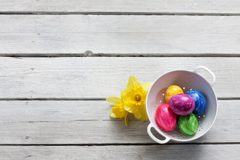 Colander of Easter eggs and daffodils on wood - CSF026792