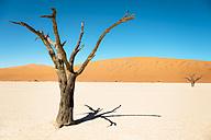 Namibia, Namib Desert, dead tree in Deadvlei - GEMF000512