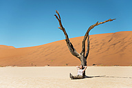 Namibia, Namib Desert, woman resting at dead tree in Deadvlei - GEMF000515