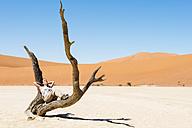 Namibia, Namib Desert, woman resting in dead tree in Deadvlei - GEMF000521