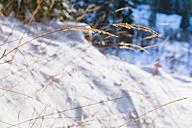 Bulgaria, Dried grass in winter - BZF000273