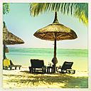 Mauritius, palm beach - JUNF000478