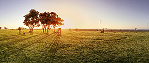 panorama of a tree in a park at sunset, South Africa, Cape Town - BMA000076