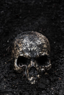 Skull in wet soil with earthworm - MID000703