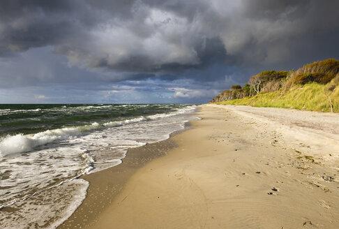 Germany, Mecklenburg-Western Pomerania, Baltic Sea beach in Born auf dem Darss - SIEF006881