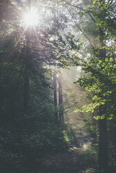 Germany, Saxony, sunbeams falling through trees in forest - MJF001685