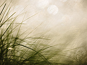 Grasses and water reflections - KRPF001668