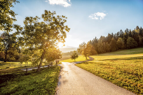 Austria, Carinthia, Ludmannsdorf, country road, forest in autumn, against the sun - DAWF000365