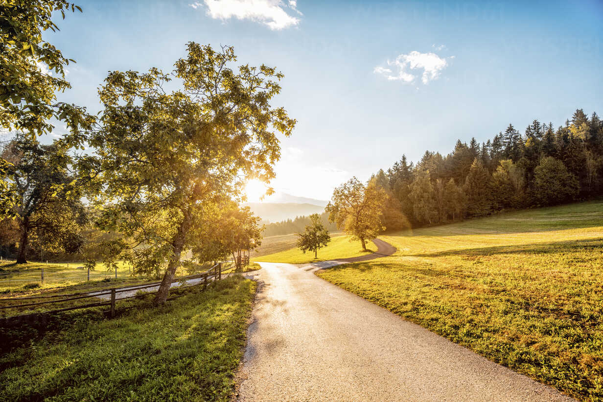 Austria, Carinthia, Ludmannsdorf, country road, forest in autumn, against the sun - DAWF000365 - Daniel Waschnig Photography/Westend61