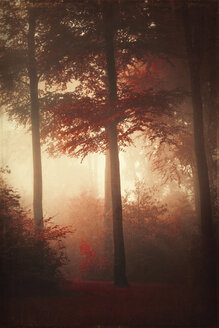 Forest in autumn, morning mist, textured effect - DWIF000658