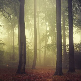 Forest in autumn, morning mist, textured effect - DWIF000667