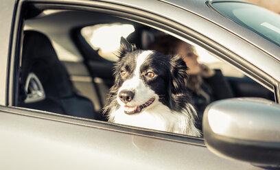 Woman driving car, dog sitting on passenger seat - OIPF000037