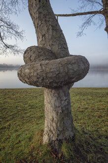 Austria, Ibm, tree trunk with knot on lake - OPF000100