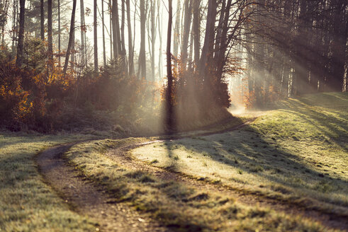 Austria, forest track and sunlight in the morning - OPF000103