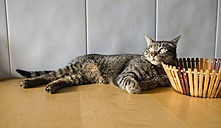 Tabby cat relaxing at home - RAEF000758