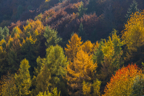 Germany, Rhineland-Palatinate, autumnal mixed forest at Ahr Valley - WGF000811