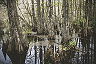 USA, Florida, Fort Myers, Six Mile Cypress Slough Preserve - CHPF000169