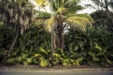 USA, Florida, Captiva Island, palm trees at the roadside - CHPF000172