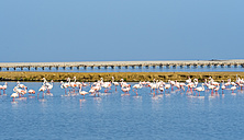 Namibia, Swakopmund Region, pink flamingos standing in the water - AMF004637