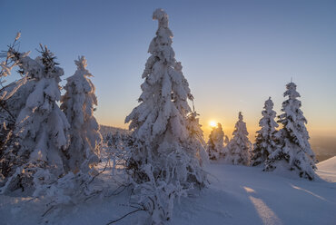 Germany, Saxony-Anhalt, Harz National Park, Landscape in winter in the evening - PVCF000744