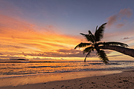 Seychelles, Praslin, Anse Kerlan, Coconut palm and Cousin Island at sunset - FOF008382