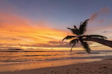Seychelles, Praslin, Anse Kerlan, Coconut palm and Cousin Island at sunset - FOF008382