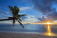 Seychelles, Praslin, Anse Kerlan, Coconut palm and Cousin Island at sunset - FOF008385