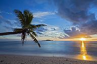 Seychelles, Praslin, Anse Kerlan, Coconut palm and Cousin Island at sunset - FOF008385