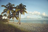 USA, Florida, Key West, palm trees on beach - CHPF000198