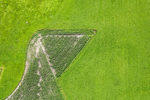 Aerial view of maize field in meadow - KLEF000030