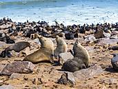 Namibia, Cape Cross, cape fur seals, Arctocephalus pusillus - AMF004679