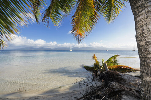 Panama, San Blas Islands, near Isla Moron - STE000142