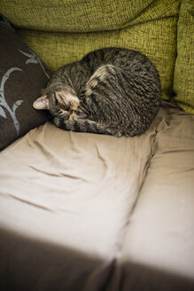 Tabby cat sleeping on the couch - RAEF000787