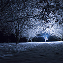 Children with angel wings standing under snow-covered trees in the darkness - SIPF000126