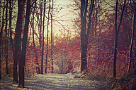 Germany, Footh path in winter forest - DWIF000672