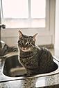 Portrait of tabby cat sitting in the kitchen sink - RAEF000814