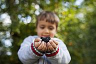 Hands of little boy holding blackberries - VABF000091
