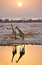 Namibia, Etosha National Park, giraffes at a waterhole at sunset - GEMF000656