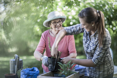 Senior woman and teenage girl gardening together - ZEF008288