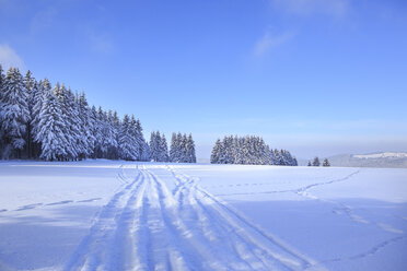 Germany, Thuringia, Wintry forest with ski tracks near Masserberg - VTF000502