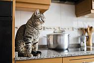 Tabby cat sitting on kitchen worktop - RAEF000821